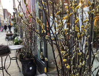 Weidenkätzchen bei Blumen und Ambiente