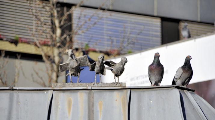 Original und Fälschung- Taubengesellschaft