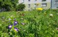 Wildes und buntes Treiben auf GWG – Grünflächen