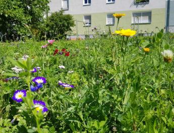 GWG lässt auf einigen Grünflächen Blumen sprießen.